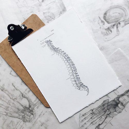 درمانهای کایروپرکتیک بر رابطه بین ساختار (به خصوص در ستون فقرات) و عملکرد (هماهنگی توسط سیستم عصبی) تمرکز دارد