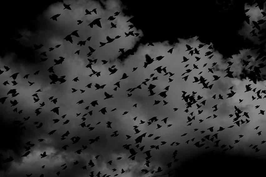 کابوسها حوادث زنده شب هستند که میتوانند باعث احساس ترس، وحشت یا اضطراب شوند.