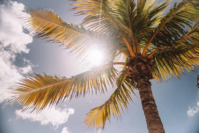 راه اصلی نوردرمانی برای مقابله با افسردگی فصلی، قرارگیری در معرض نور خورشید است.
