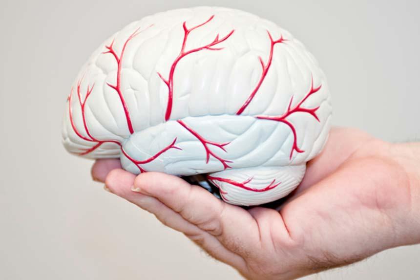 شکل مغز